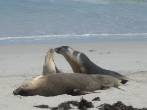Seal Conservation Park