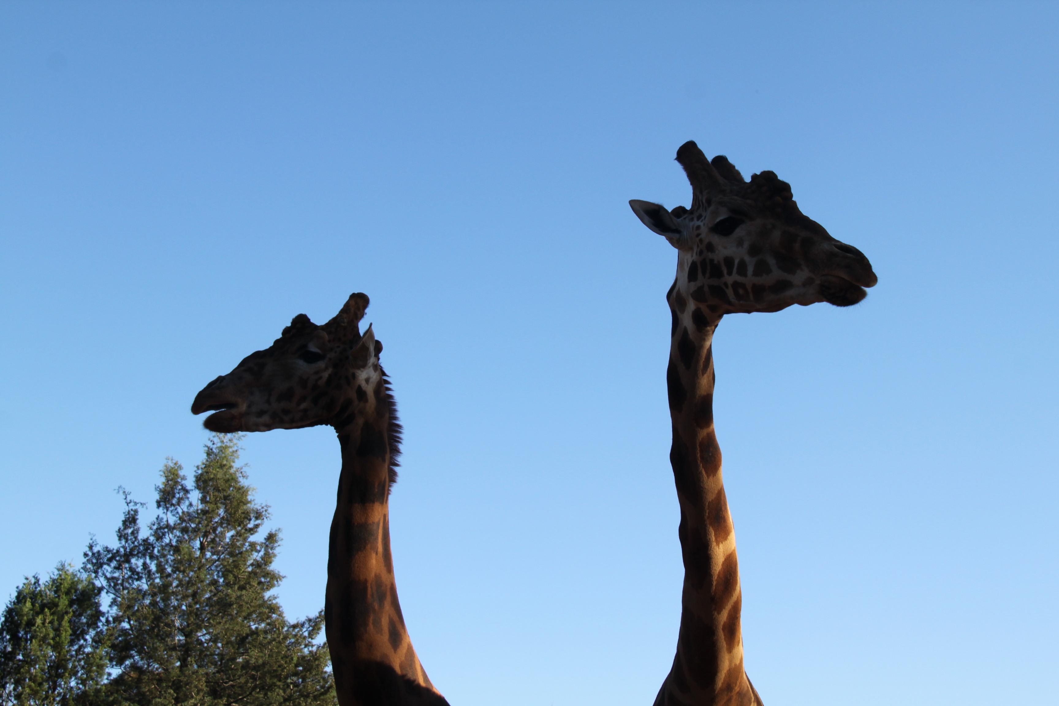 Australia Safari Tours Travel