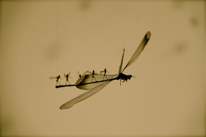 Look at the insects on the dragonfly