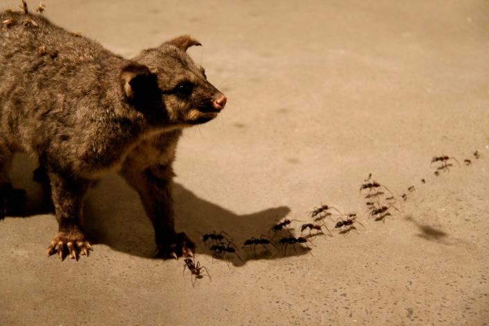 The possum taxidermy