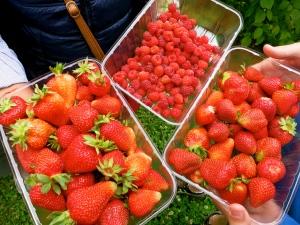 Berries, berries and more berries