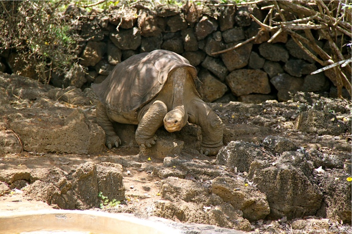 LonesomeGeorge