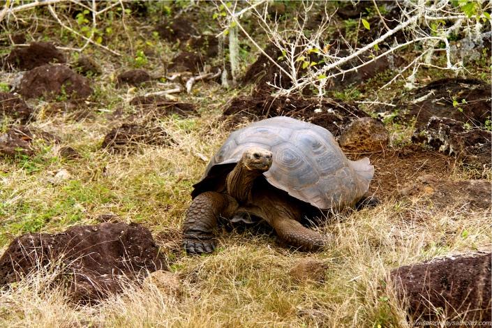 Tortoise2